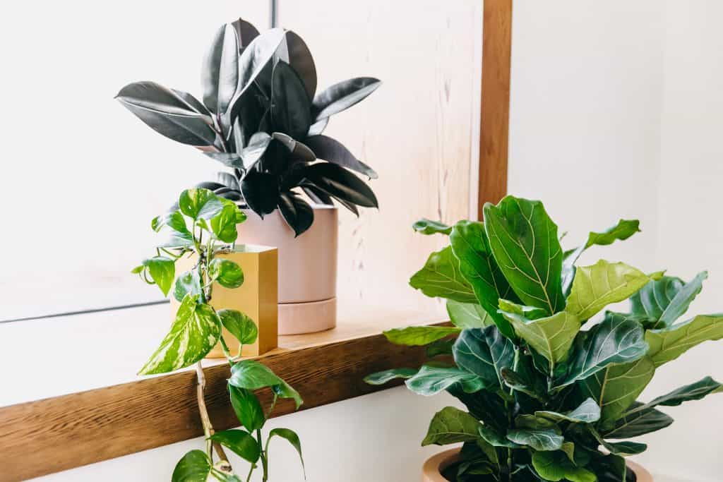 Indoor plants | Green Assembly