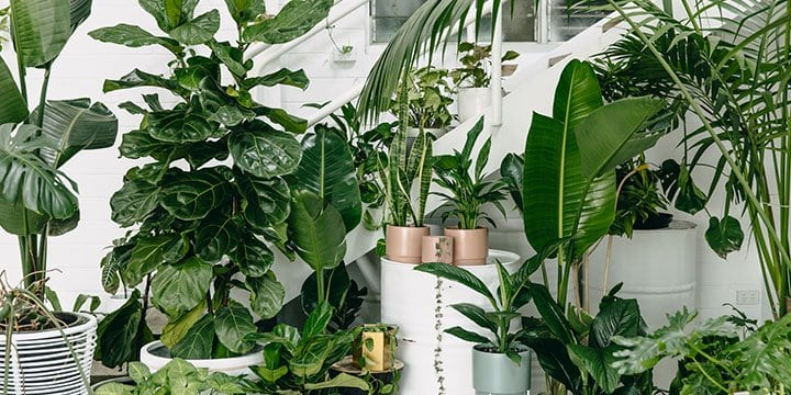 The Indoor Plant Care Hacks To Turn Your Black Thumb Green