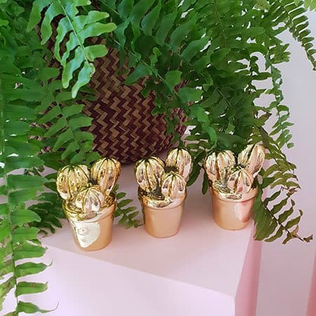 All Home or Office Indoor Plants | Plant Delivery Service Perth House Plants For Sale Perth on house plants design, house plants books, house plants outdoors, house plants food, house plants house, house plants that clean the air, house plants flowers, house plants low light, house plants guide, house plants dogs, house plants gifts, house plants pets, house plants care, house plants with long green leaves, house plants blog,